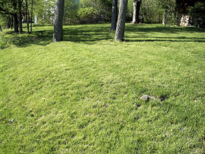 commercial landscaping tips