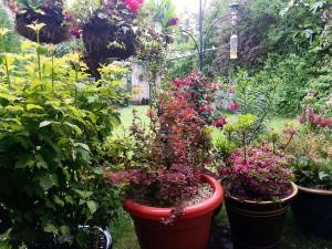 gardening in Atlanta homes
