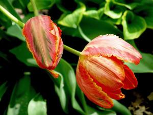 tasks to handle in your garden