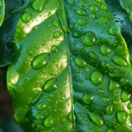 Don't let precious rainwater go to waste. Use these tips to collect it and re-use it in your garden. Source: Pixabay
