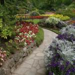 health benefits of plants