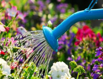 proper plant watering
