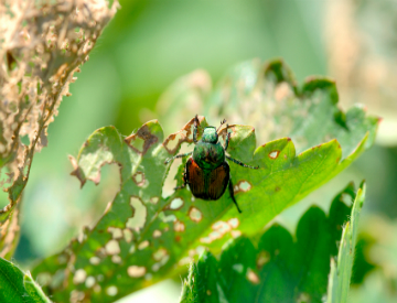 Here are some tips to help you manage pests in your landscape organically. ©iStockphoto.com/CarolinaSmith