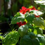 Use these tips to help keep your plants from being overexposed to the sun. ©iStockphoto.com/sorsillo